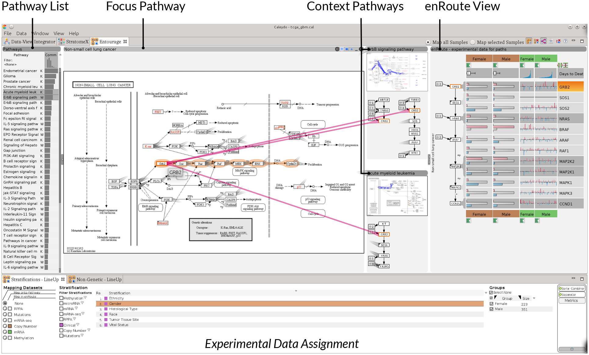 Pathway Visualizations Overview